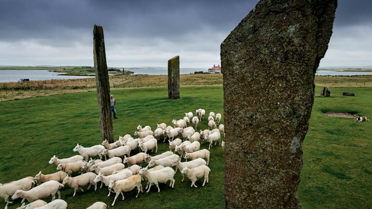 "In the Heart of Neolithic Orkney, sheep graze among the 5,000-year-old Stones of Stenness. ""History is ..."