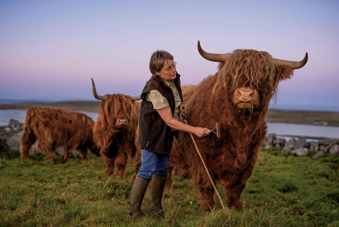 Lesley Matheson raises Highland cattle for beef sold to upmarket restaurants throughout Europe.