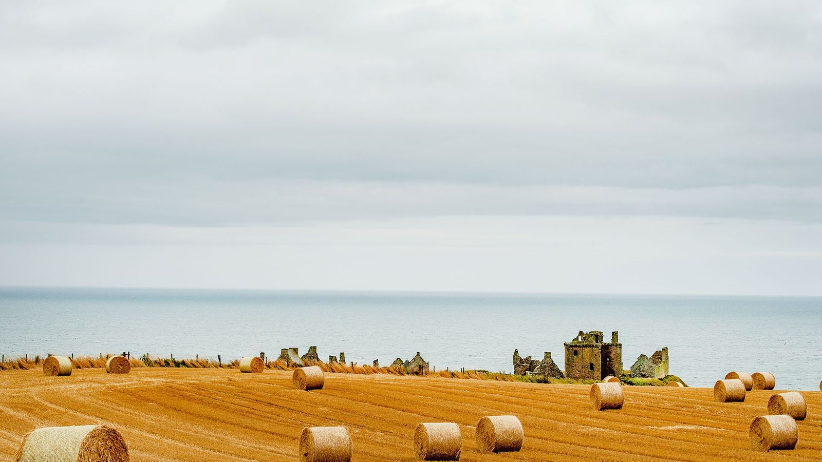 The golden fields stretching inland from Dunnottar Castle on the Aberdeenshire coast are not just a ...