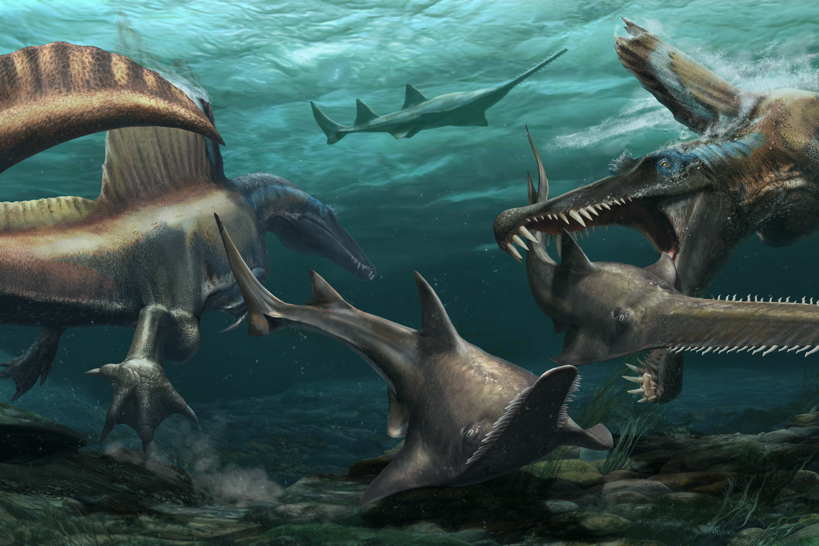 Two Spinosaurus aegyptiacus hunt the prehistoric sawfish Onchopristisin the waters of a river system that blanketed ...