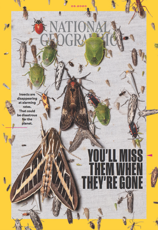 The May 2020 issue of National Geographic Magazine features a special investigation into the 'insect apocalypse'. ...