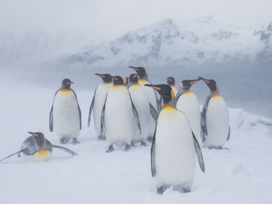 Yellow penguin spotted in Antarctica—here's why it's so rare