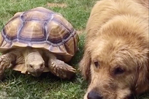 Tortoise and dog