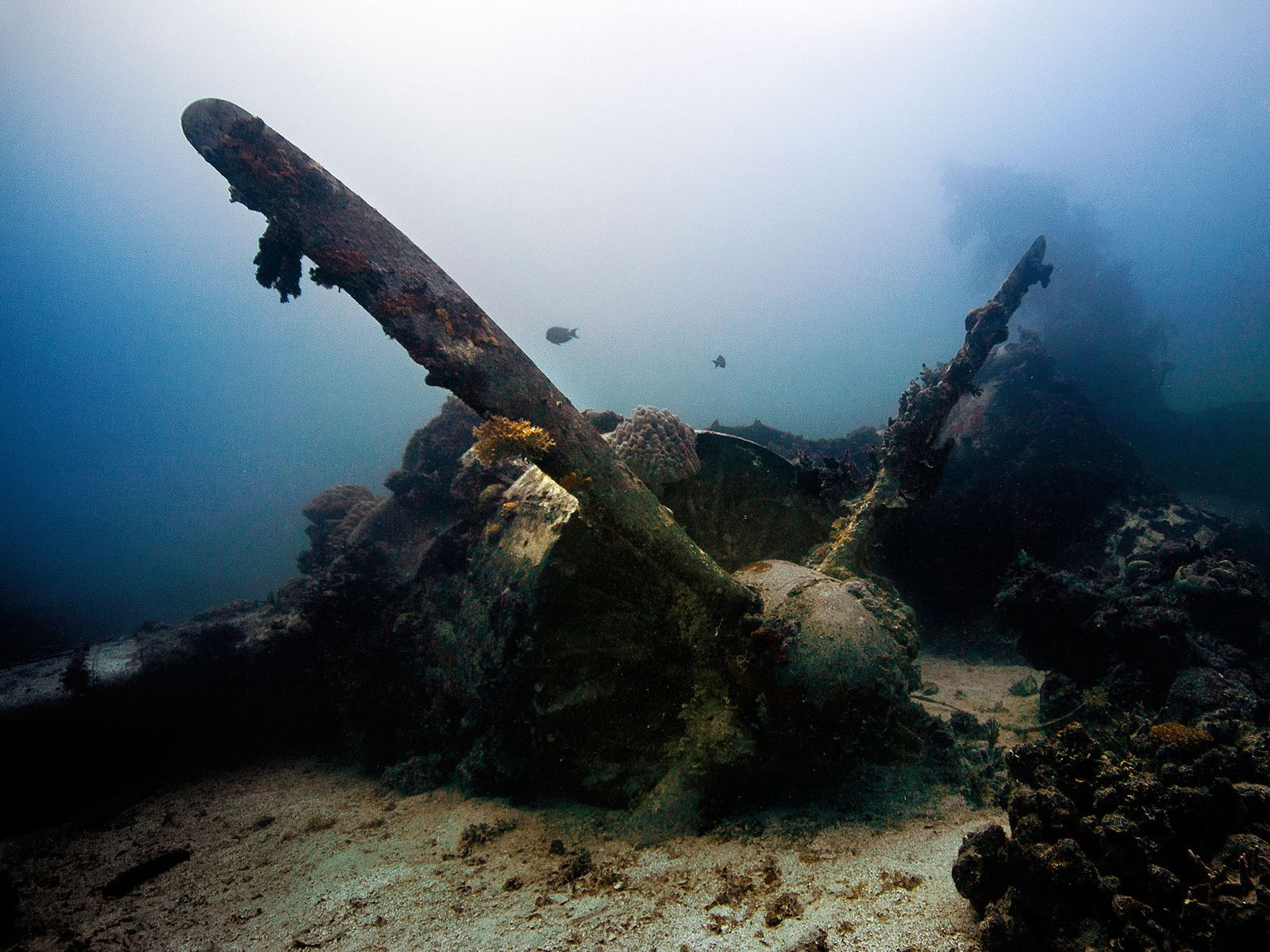 Thrilling Underwater Shipwrecks to See Around the World