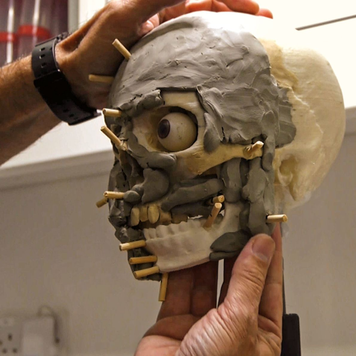 After DNA analysis established the nature of Calpeia's soft tissue and muscles, the conservators sculpted clay ...