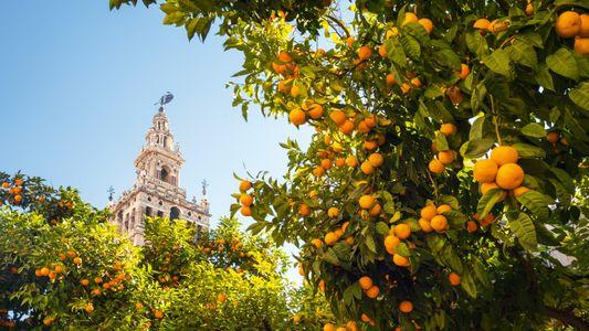 A neighbourhood guide to Seville