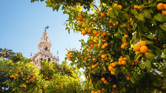 Seville claim's the world's largest gothic cathedral and one of Europe's biggest old towns.