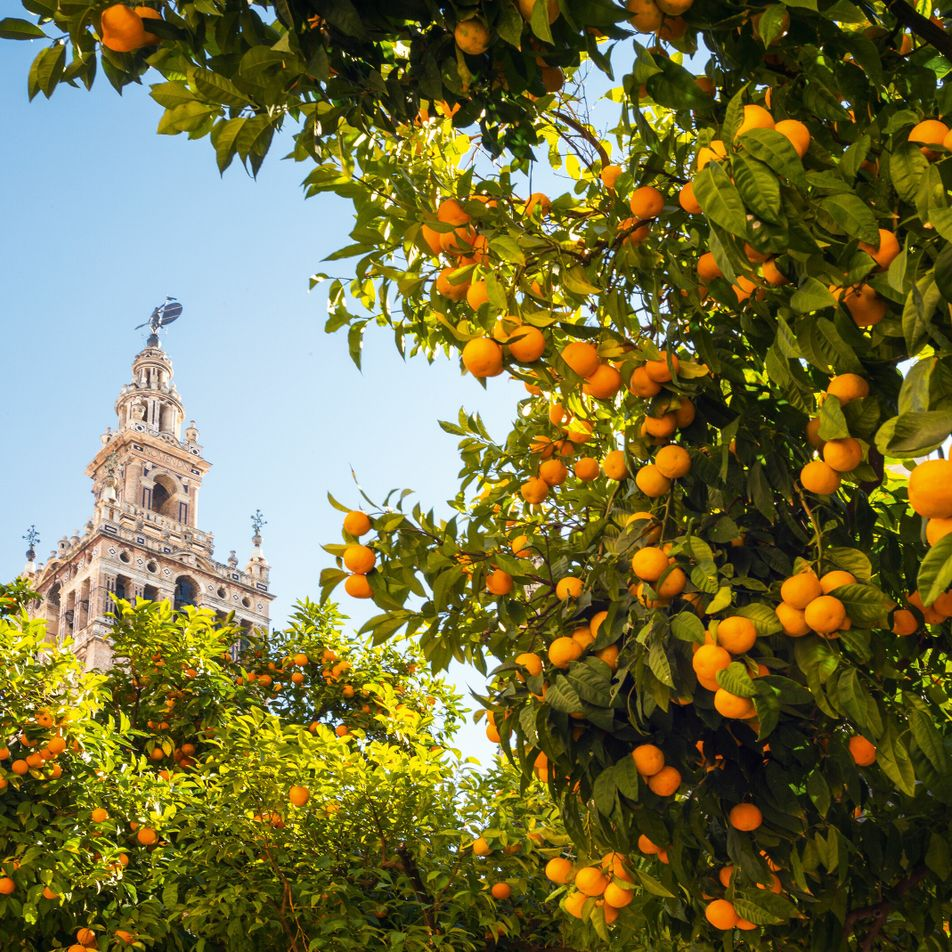 A neighbourhood guide to Seville