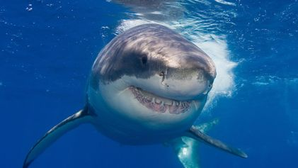 Helping kids overcome their fear of sharks and other 'scary' animals