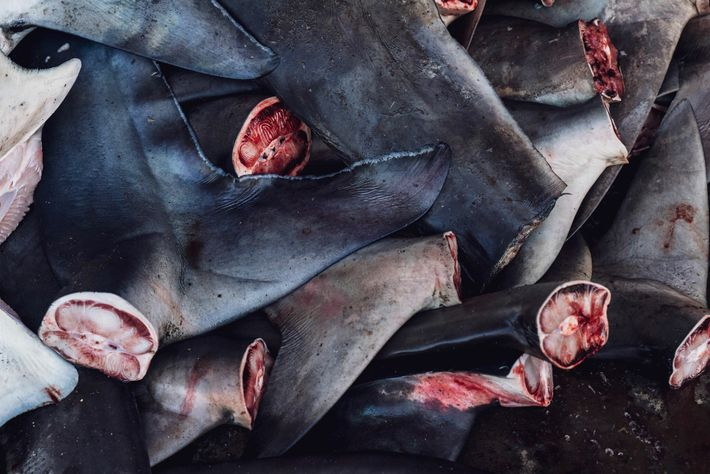 At Tanjung Luar's fish market, sharks' tails and fins are removed.
