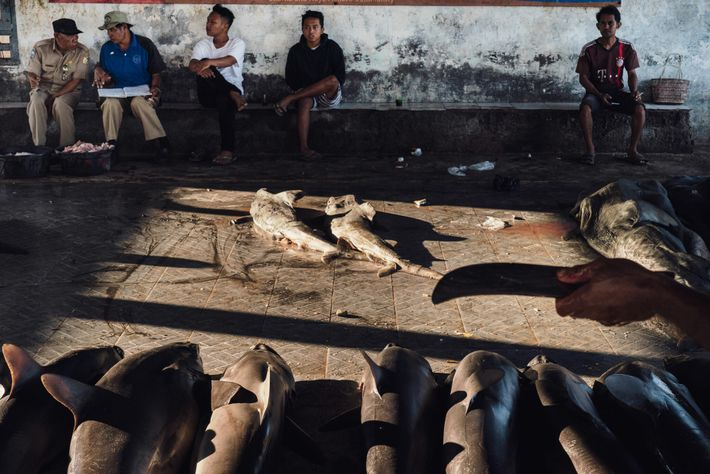Auctioneers, fish market workers, buyers, and others wait for the auction at Tanjung Luar to begin. ...