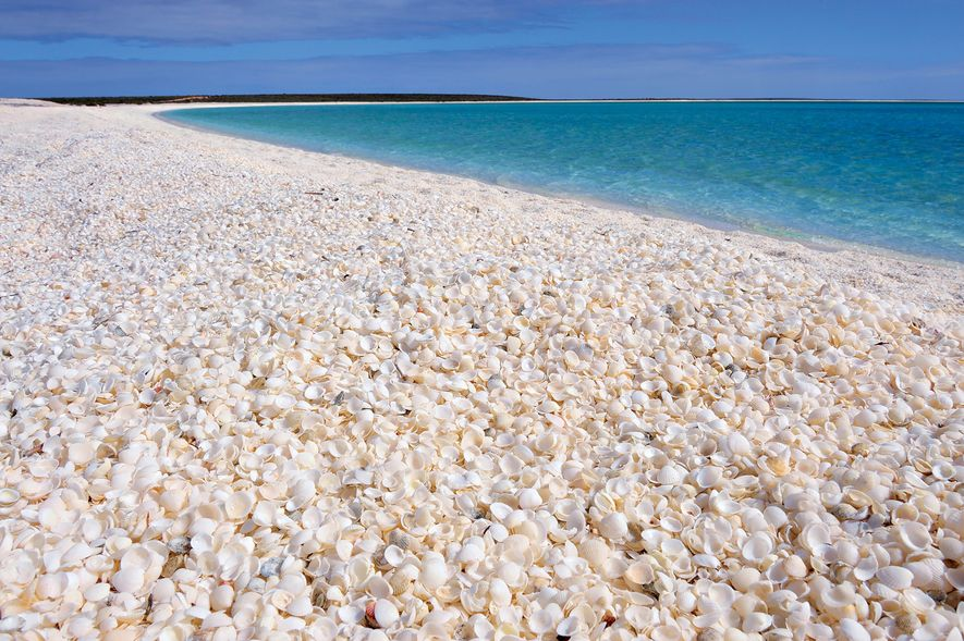 Thousands of tiny white shells fill the beach in Shark Bay, Western Australia.