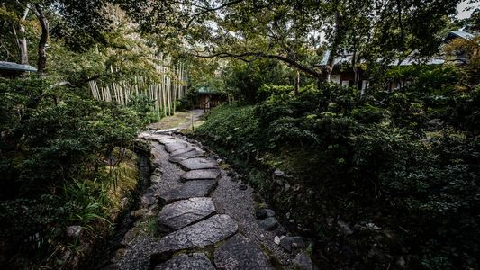 From tea fields to fine dining: a culinary journey through Japan's historic Kansai region