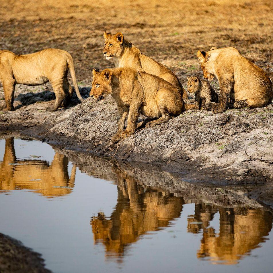 What happens next? The impact of coronavirus on poaching in Zambia and Zimbabwe