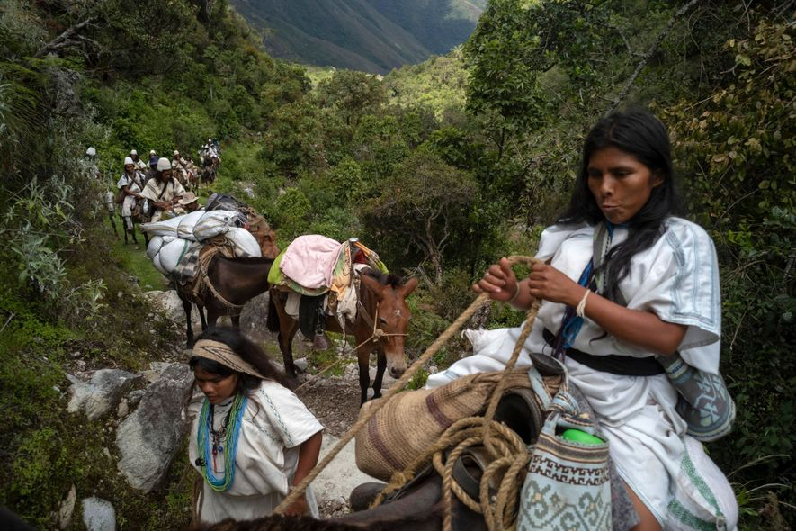 Seynekun Villafaña coaxes her mule forward through dwarf forests and shrubs that live at about 10,000 ...