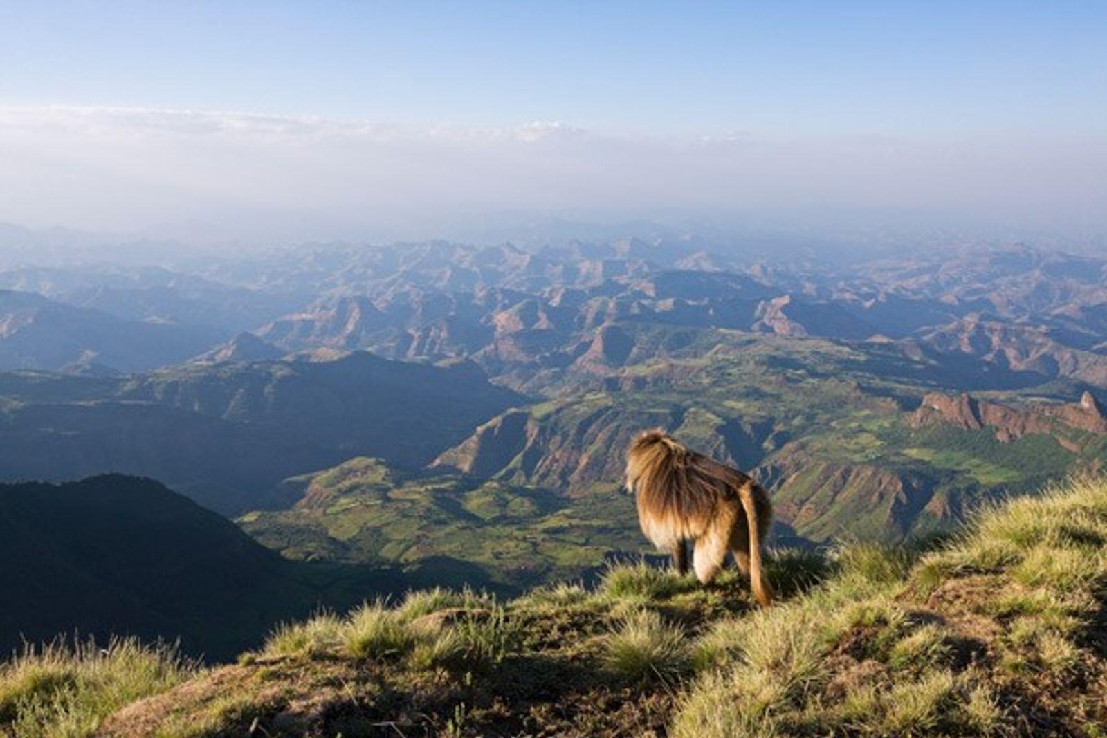 Ethiopia: Trekking the Simien Mountains