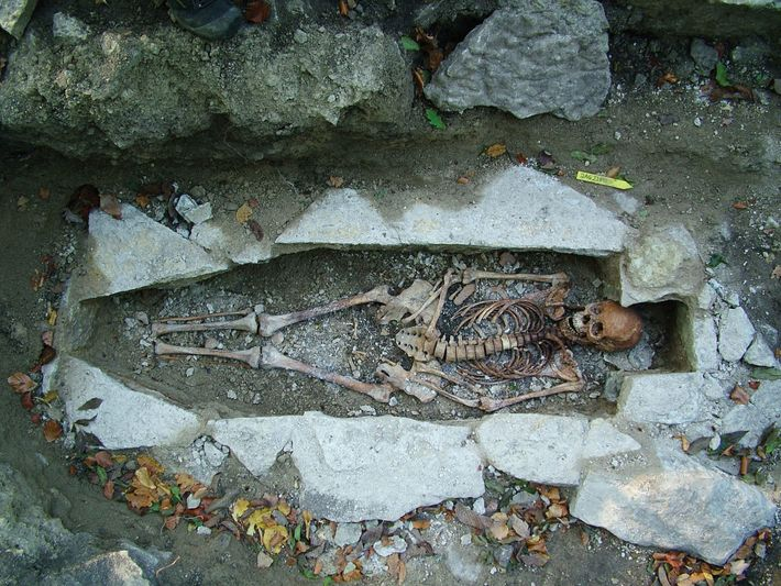 DNA from a female skeleton named Kata, found at a Viking burial site in Varnhem, Sweden, ...