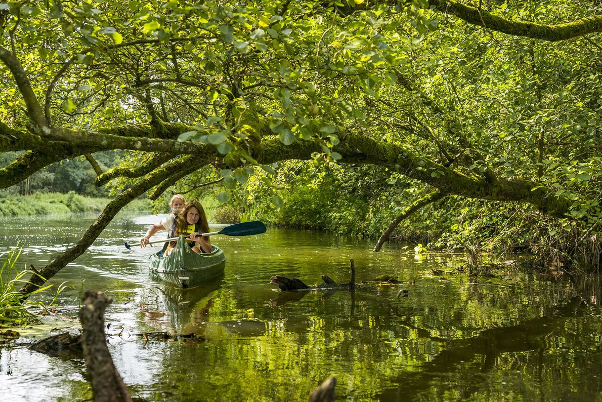 Hiking, paddling and outdoors cooking: discover forest bathing in Sweden's Skåne region