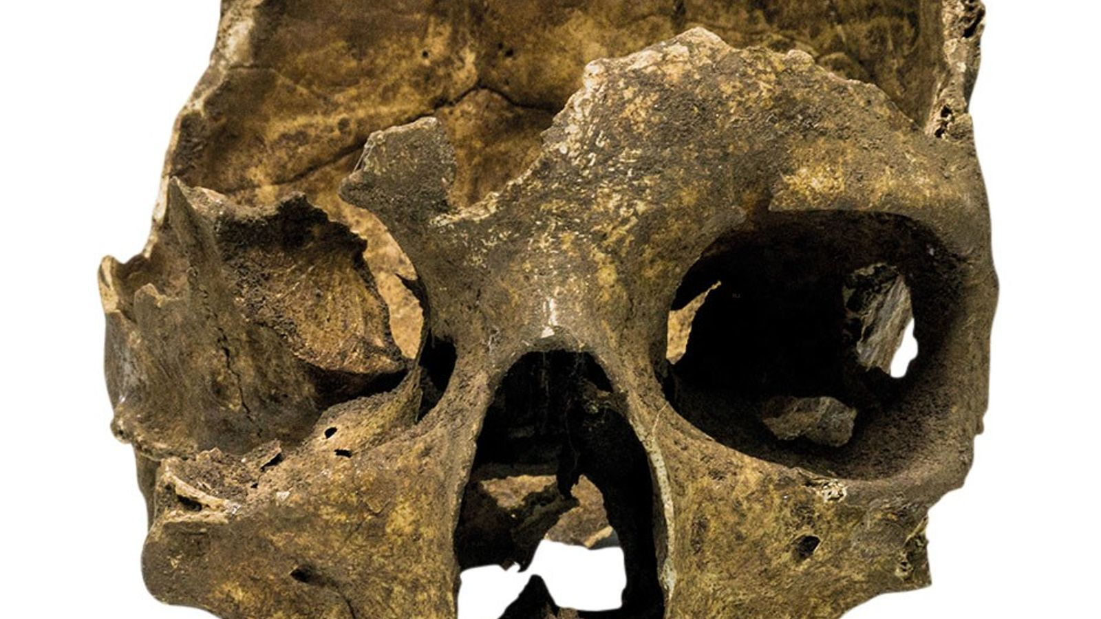 Human skull found in a cave at Europa Point, Gibraltar, in 1996.