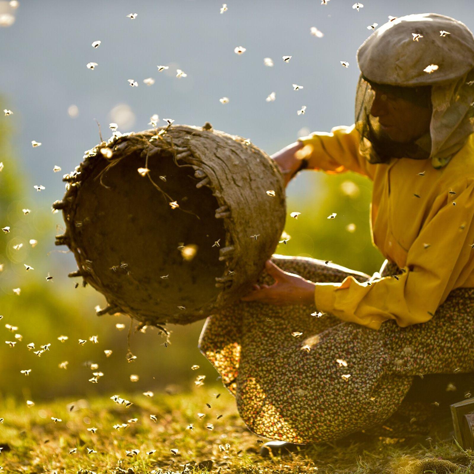 Honeyland, directed by Tamara Kotevska and Ljubomir Stefanov (2019), paints a portrait of North Macedonian beekeepers and ...