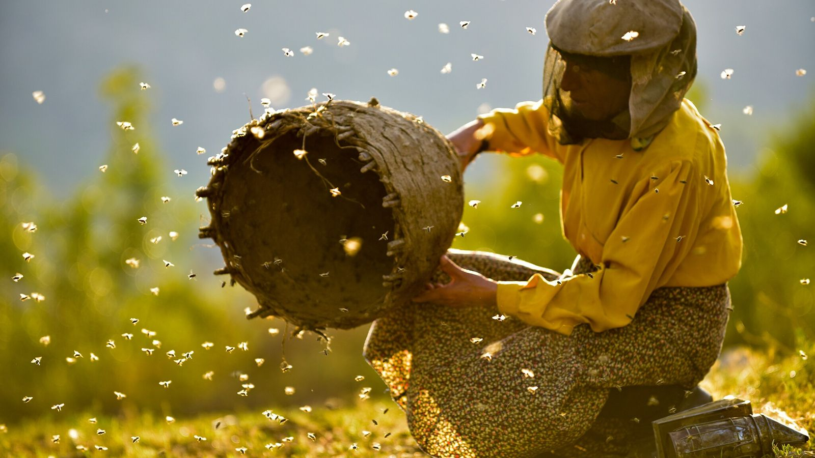 Honeyland, directed by Tamara Kotevska and Ljubomir Stefanov (2019), paints a portrait of North Macedonian beekeepers and ...