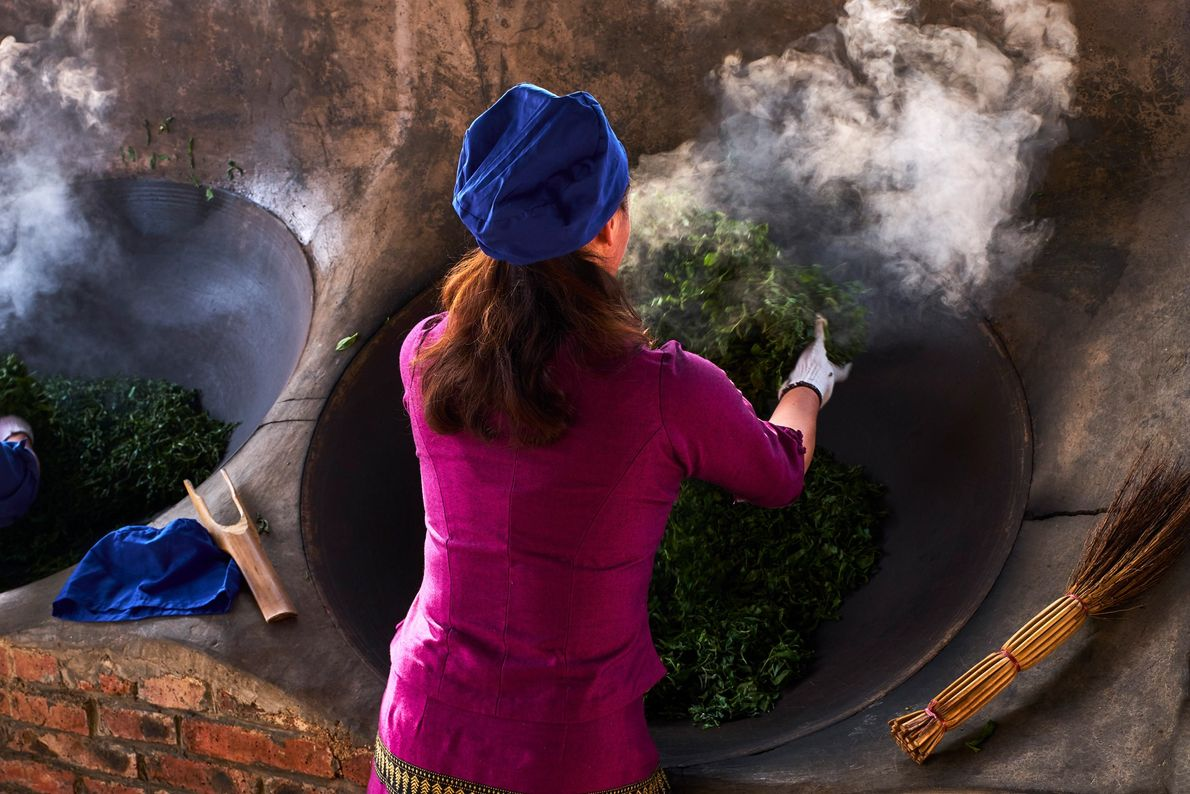 After Pu'erh leaves are harvested and withered briefly, the leaves are stir fried. This process is ...