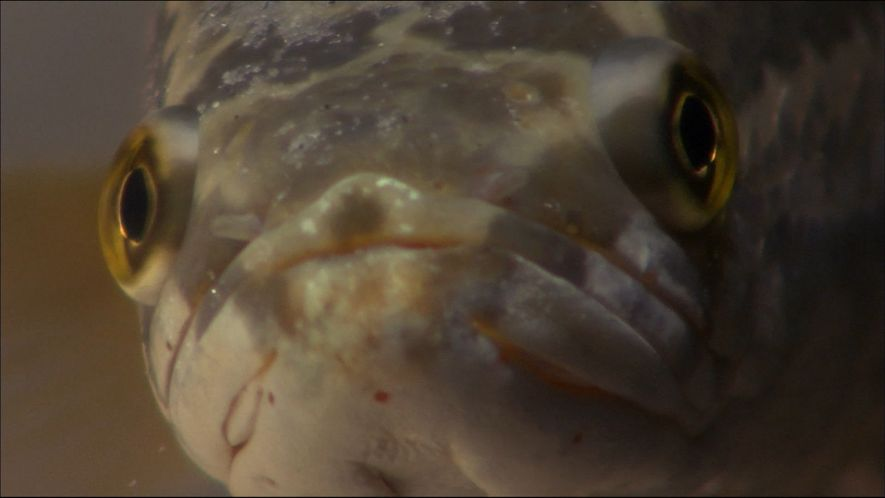 Snake Serpent VS Baby Turtle