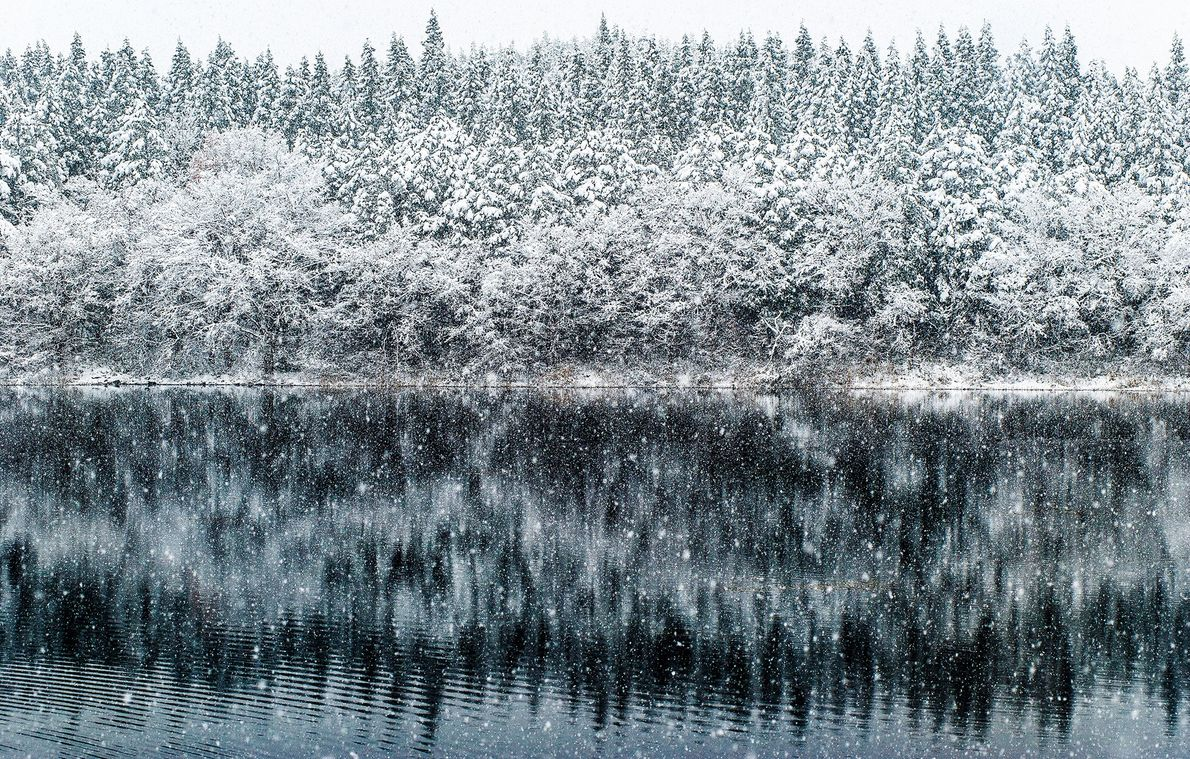 "November Yamagata Japan, ""Sanbongi swamp"" in the middle of the late autumn mountain, snow precipitated from ..."