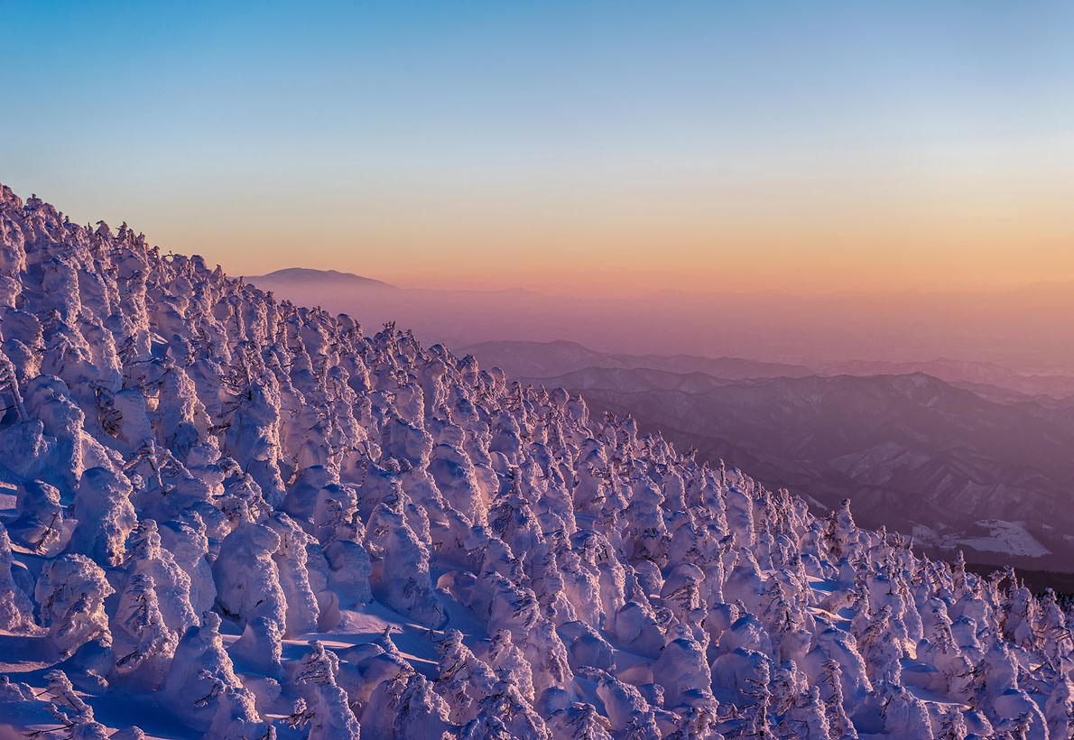 """In February in Yamagata, Japan, the strong winds and humidity produced ice monsters. The dusk where ..."