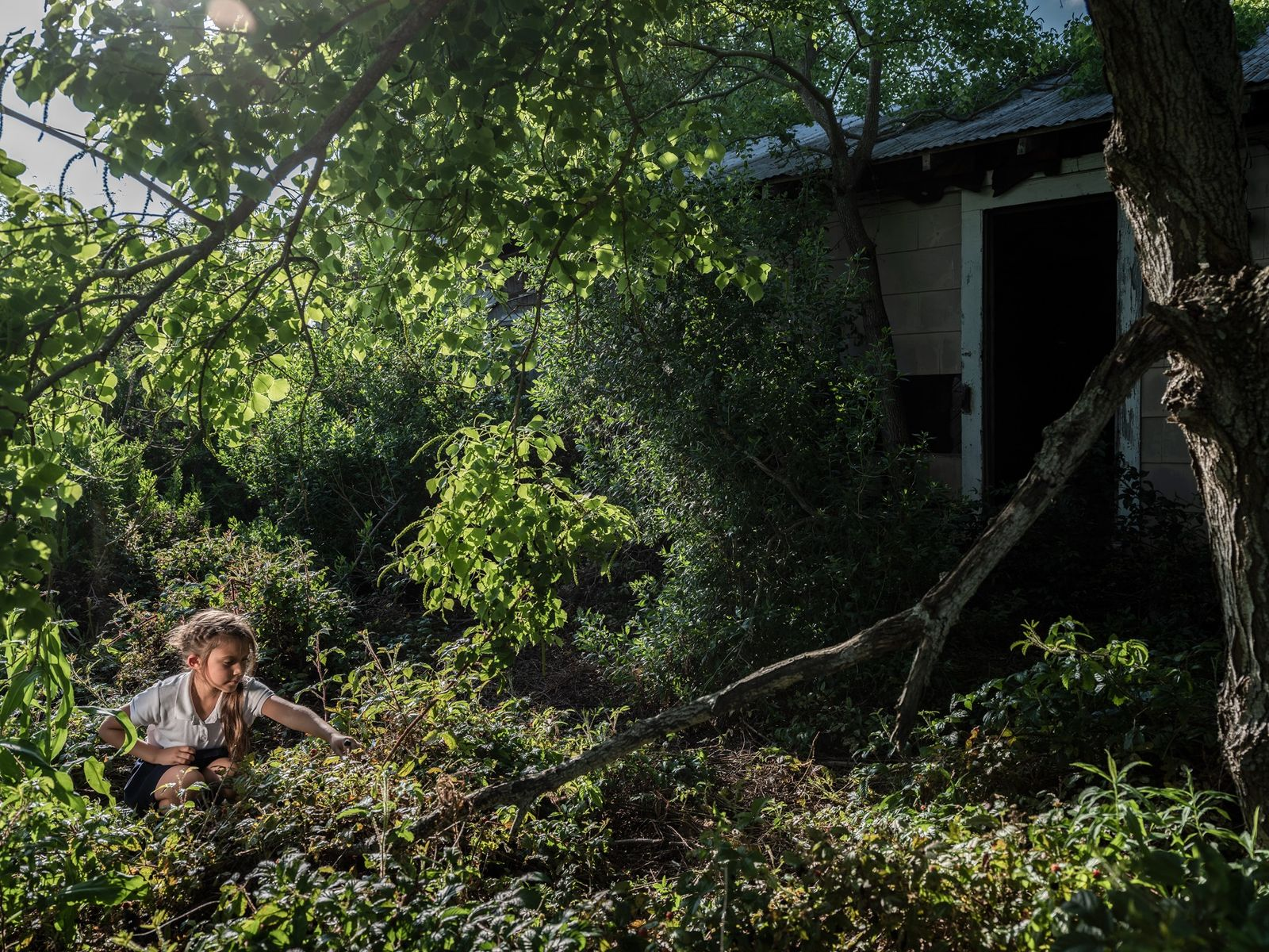 Eight-year-old Bayah Bergeron picks berries by an abandoned house across the street from her home. Bayah's ...
