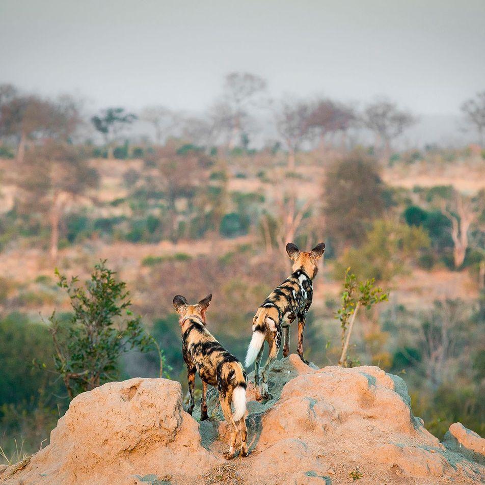 The alternative safari: The green Kalahari