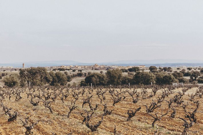 Ancient vines, some more than 180 years old, supply the grapes for the wine produced at ...