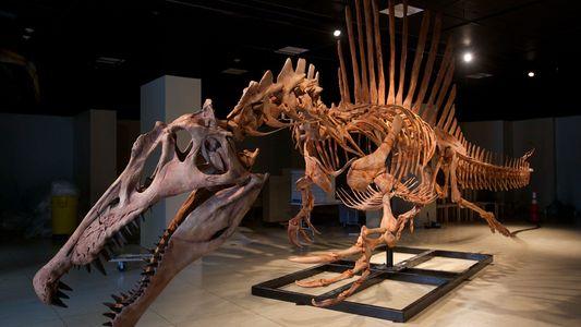 Fierce 'Semiaquatic' Dinosaur May Have Been an Awkward Swimmer