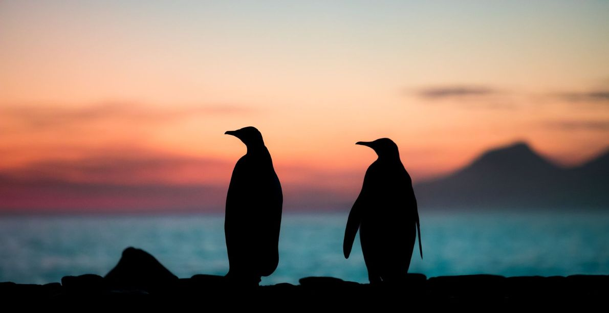 """""""This was an early morning with the most beautiful sunrise at St. Andrews Bay, South Georgia ..."""