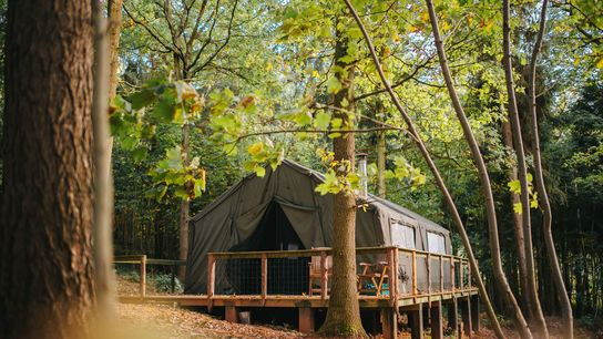 Safari tent in the forest