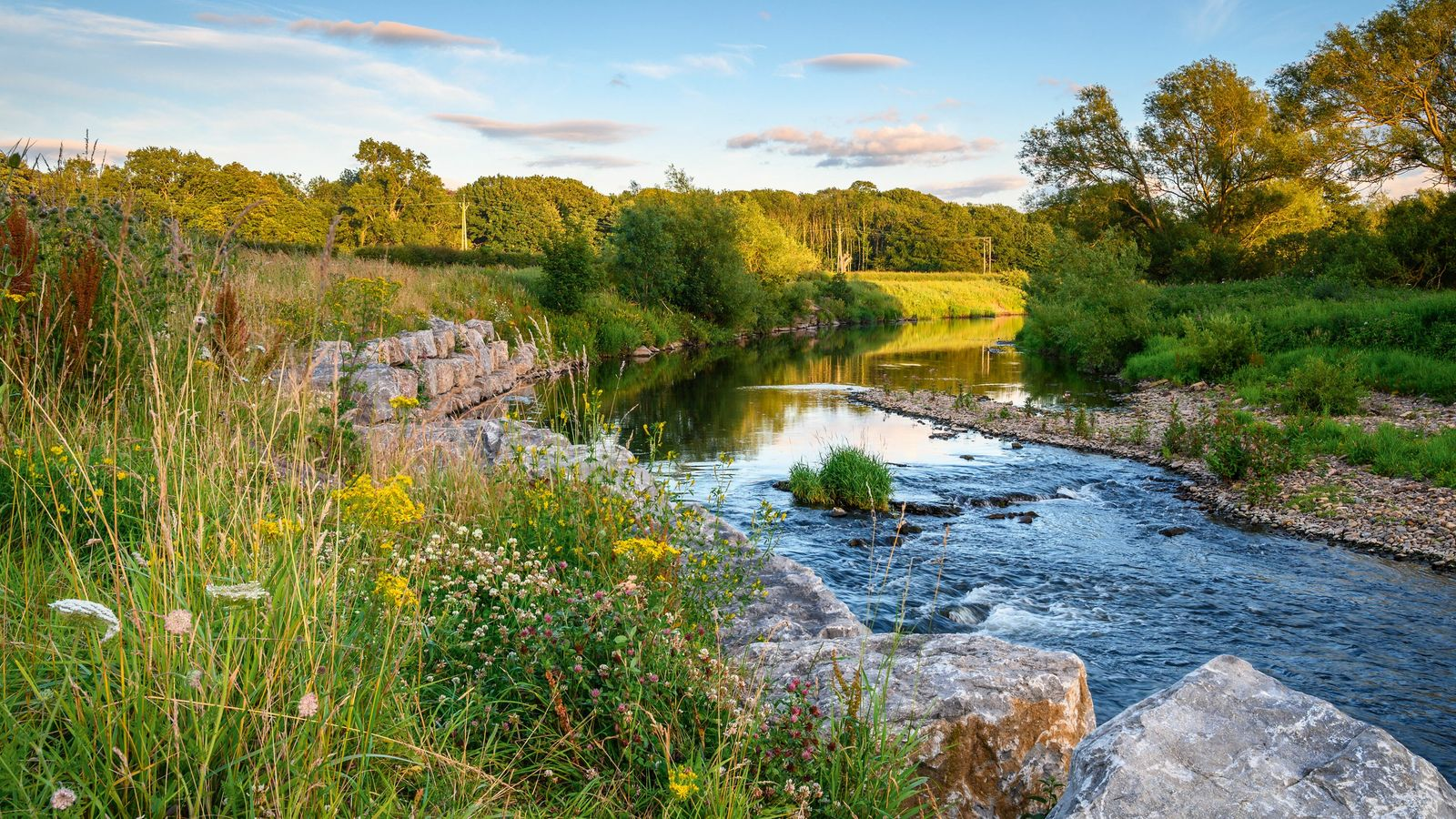 Wildflowers along the banks of the River Wear, near Bishop Auckland.