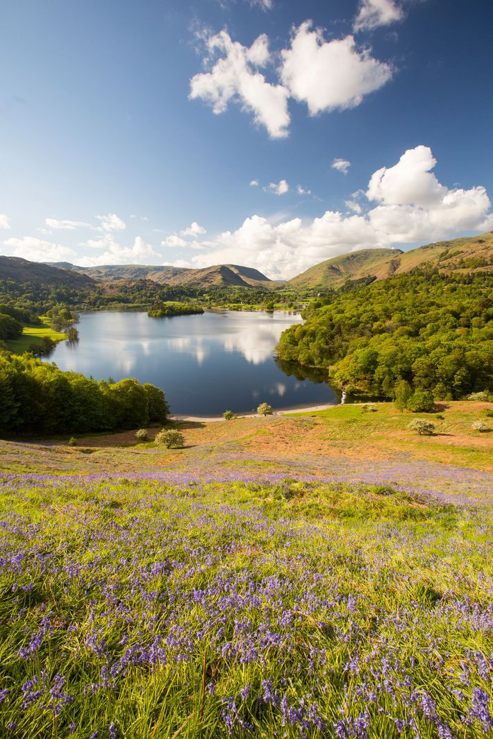 Bluebells nod in the sun on Loughrigg Terrace, overlooking Grasmere.
