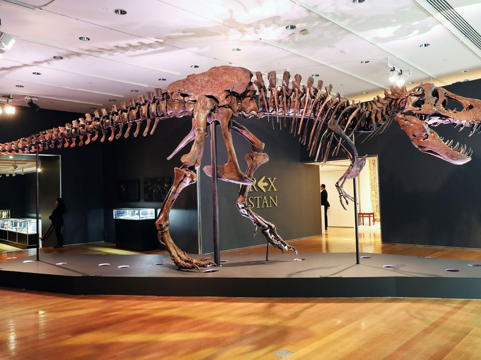 'Stan' the T. rex just sold for £24.6 million—and scientists are furious