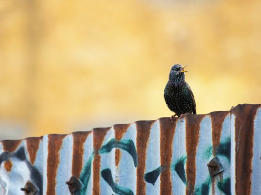 Britain's songbirds are in decline — here's how travellers can help
