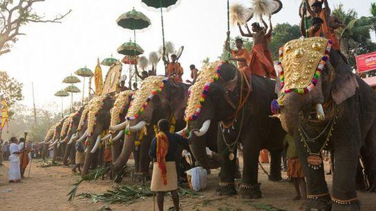 Elephant festival, Kochi, India.