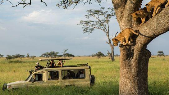 On safari, Serengeti.