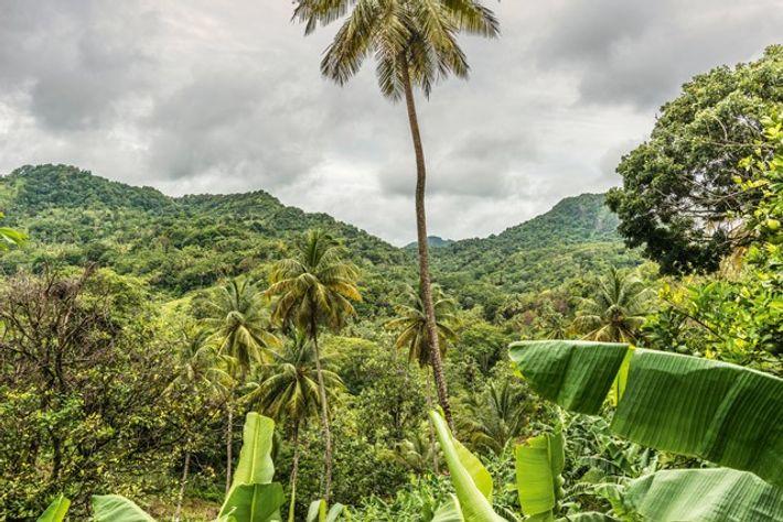 St Lucia rainforest interior