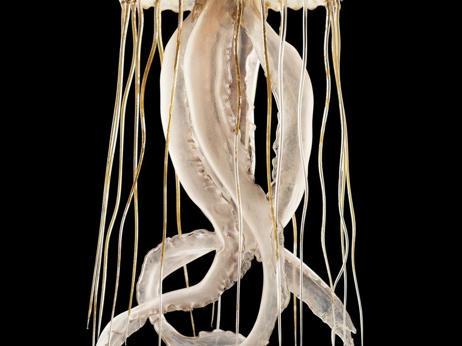 A menagerie of sea creatures come to life in vintage glass models