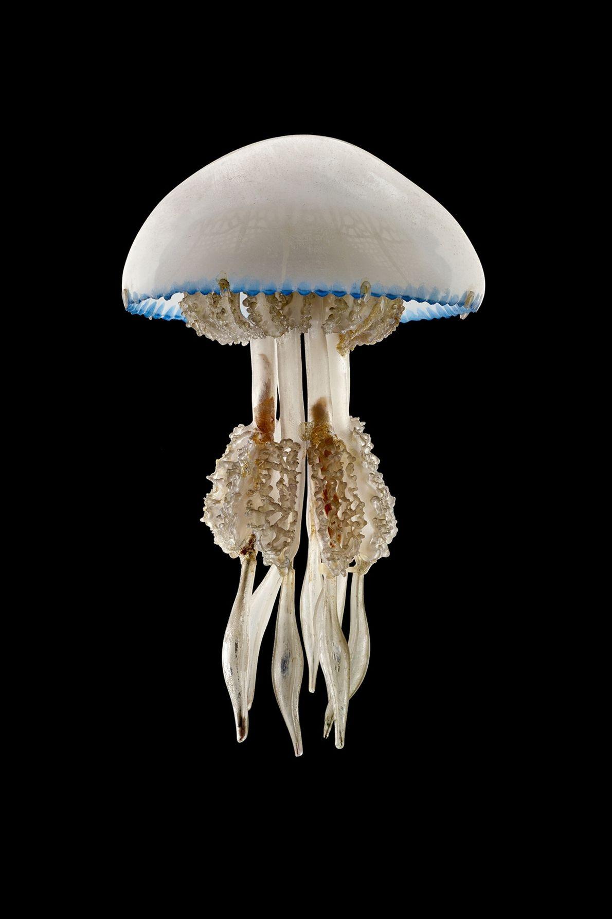 departments-proof-barrel-jellyfish
