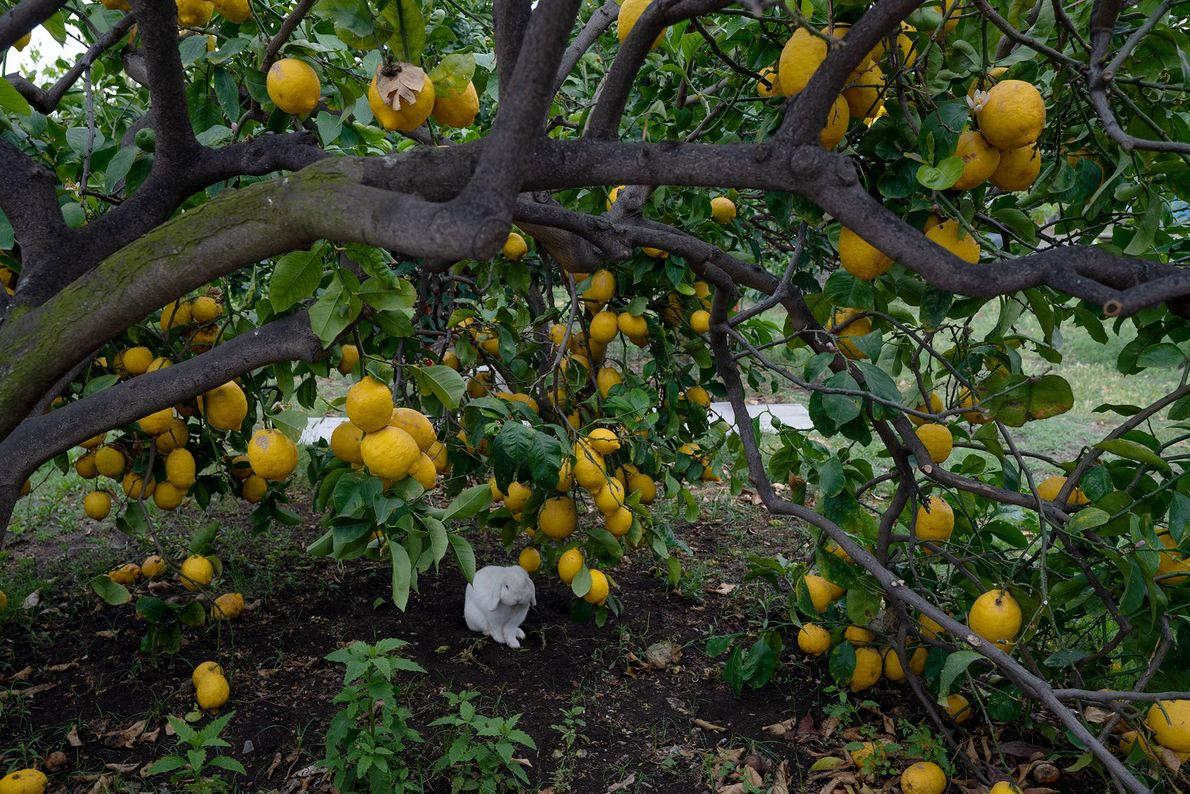 Lemon trees and bougainvillea plants thrive in Stromboli's nutrient-rich, volcanic soil.