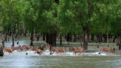 Explore the world's largest mangrove forest