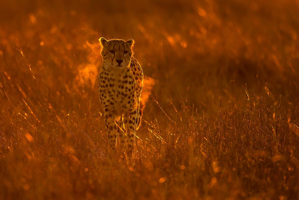 Bojan has led a photo tour in Africa to coach photographers and capture wildlife, including this ...