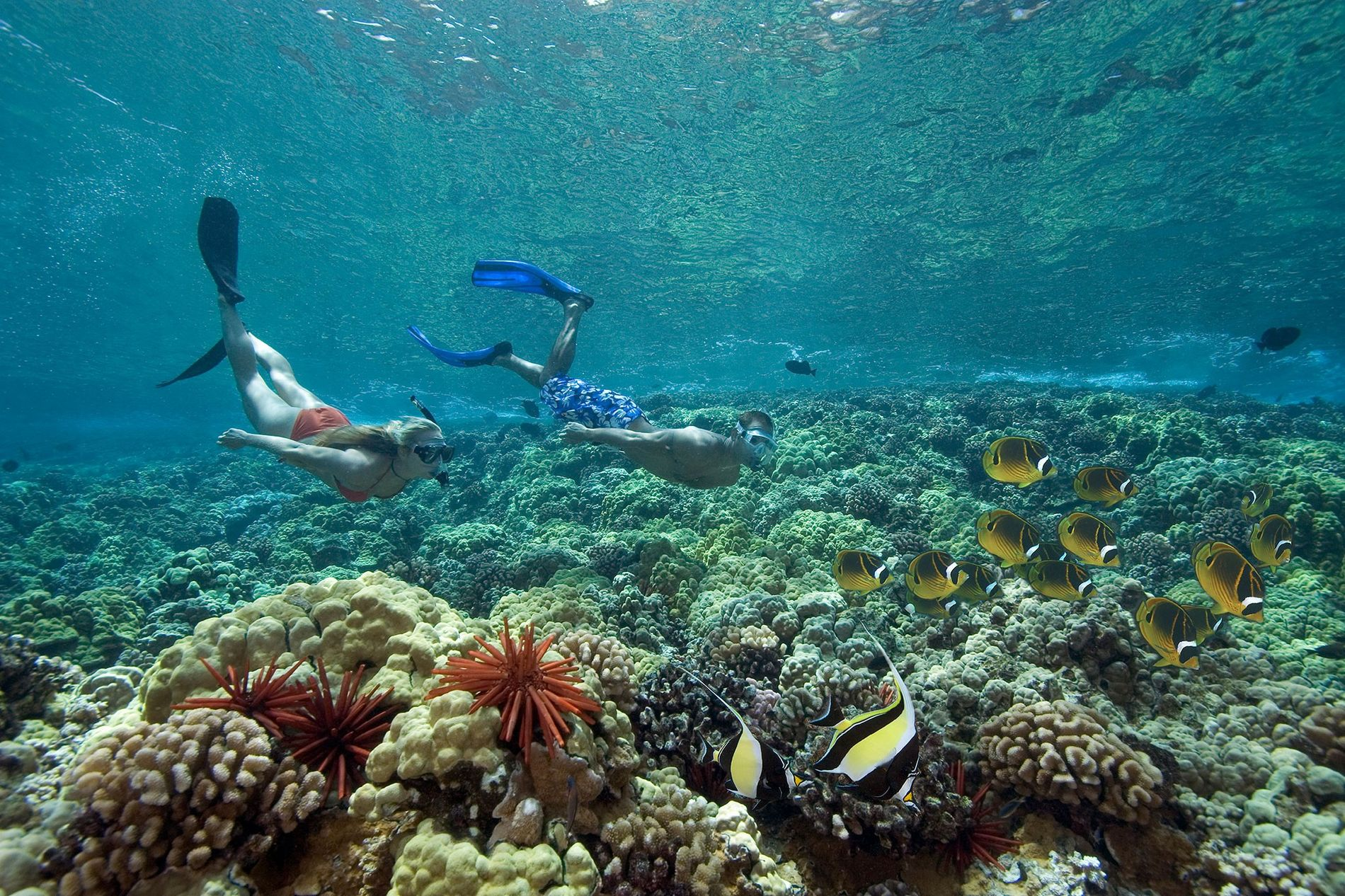 In Hawaii two free divers explore a coral reef and some of its resident butterflyfish.