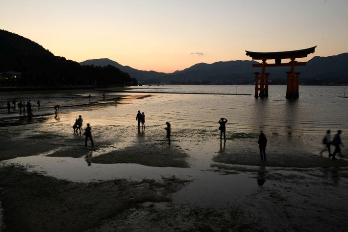 Itsukushima Shrine, which is known as the floating shrine, is located on Miyajima and is a ...