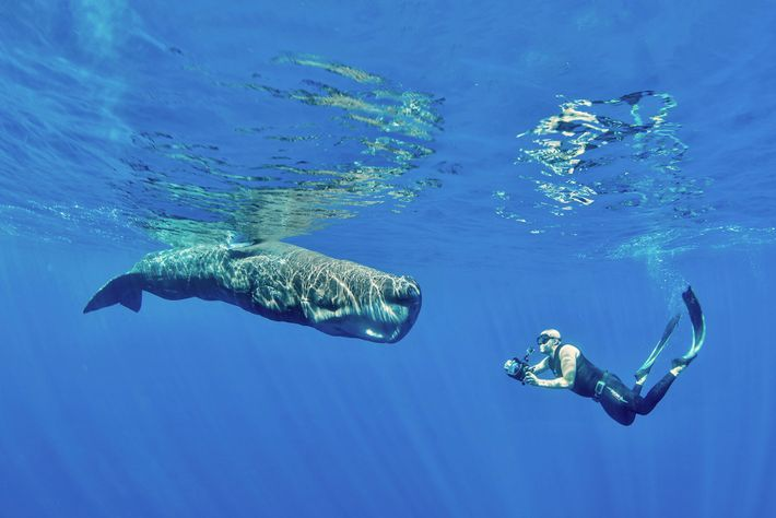 May to October is the best time to dive in the Azores, when you're likely to spot ...